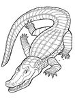 coloriage gratuit Crocodiles
